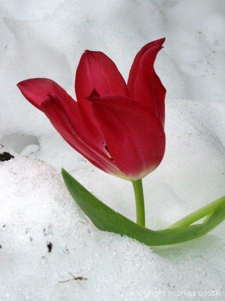 2003-winter-013