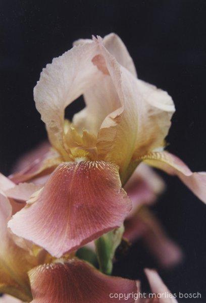 2009-bloemen-003