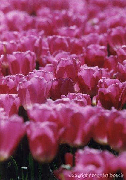 2009-bloemen-007
