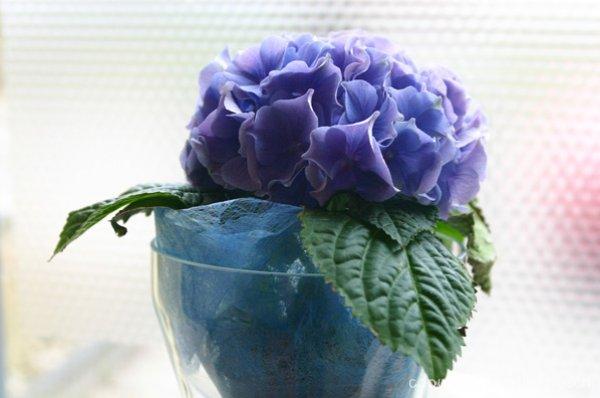 2009-bloemen-008