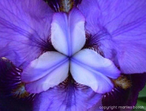 2009-bloemen-009
