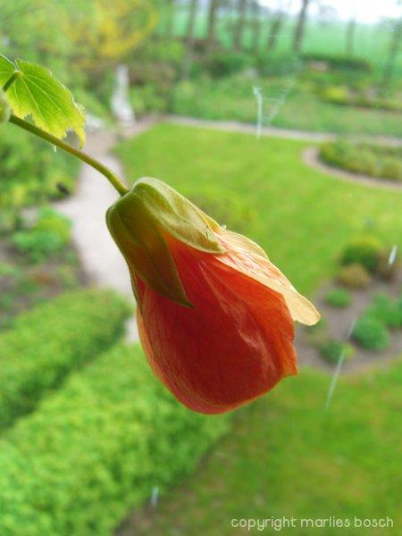 2009-bloemen-012