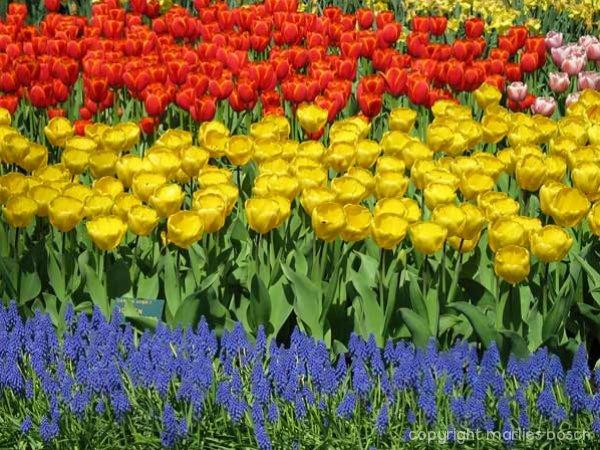 2009-bloemen-014
