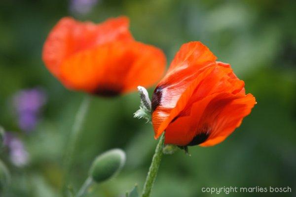 2009-bloemen-019