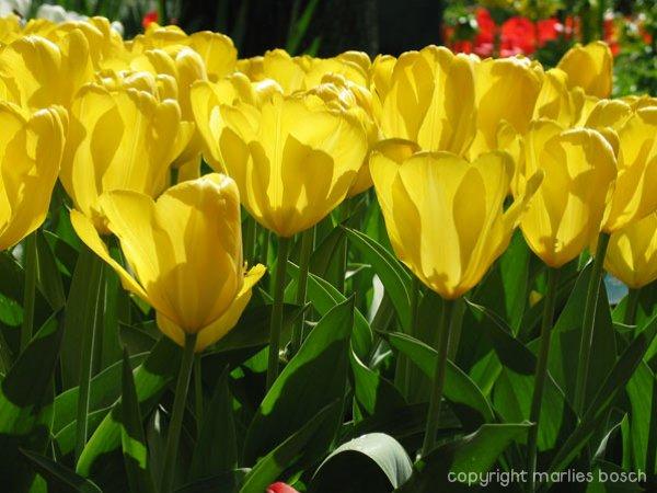 2009-bloemen-024