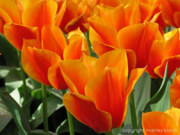 2009-bloemen-026
